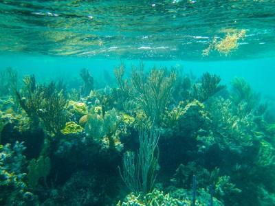 Underwater in Eleuthera